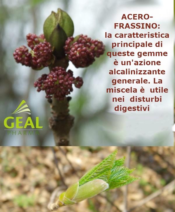 013-acero-frassino_R